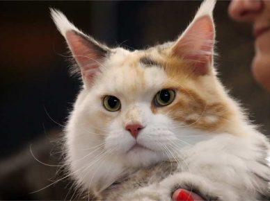 Выставка кошек в матнасе «Дюна»